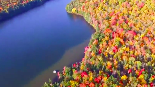 Leaf peeping 101: The best places to watch the season change